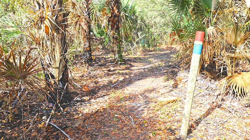Marked trail through scrub area