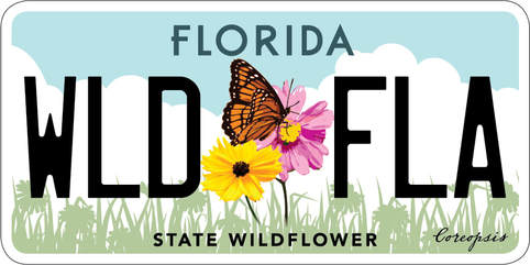 Florida Specialty License Plate -  State Wildflower