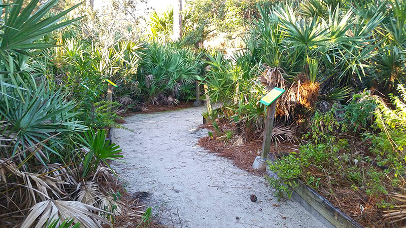 Sandy path through palm fronds
