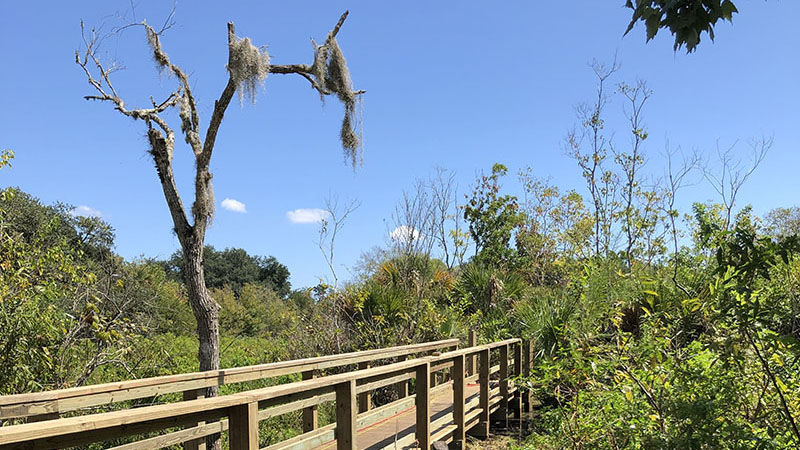 Boardwalk surrounded by brush
